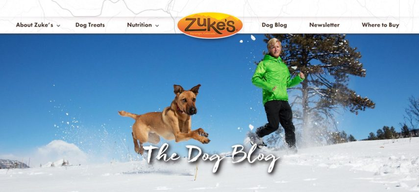 zukes dog blog