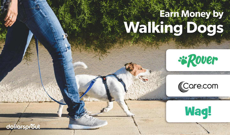 Earn Money Walking Dogs