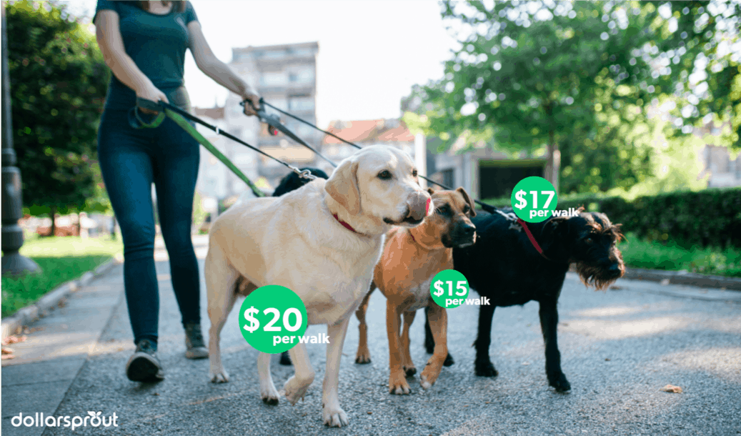 Hypothetical dog walking rates of up to $20 per hour